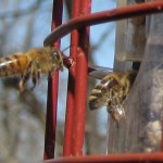 bees_feeder